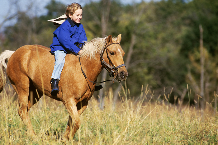 Hippotherapy: treatment with the soul