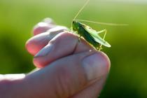 Почему малыши жестоки к насекомым?