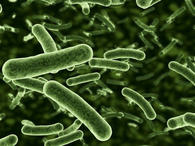 Вирусы и бактерии – в чем разница