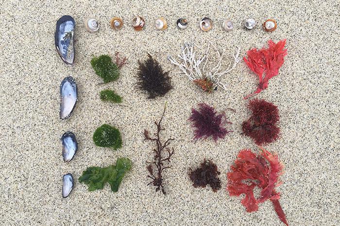 Косметика на основе морских компонентов: чем она лучше?
