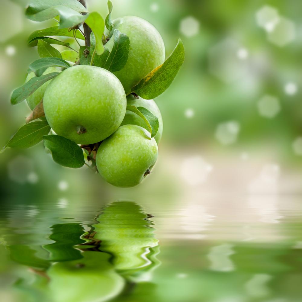 Зеленые яблоки помогают предотвратить ожирение