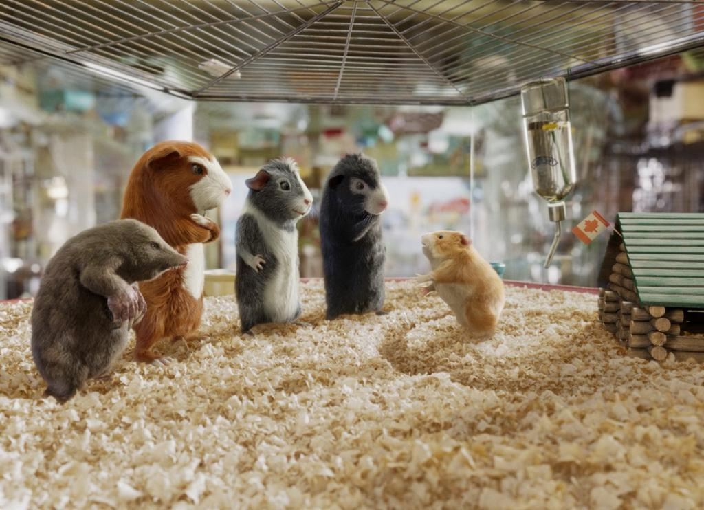 Guinea pig mission