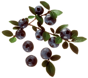 What can blueberries do?