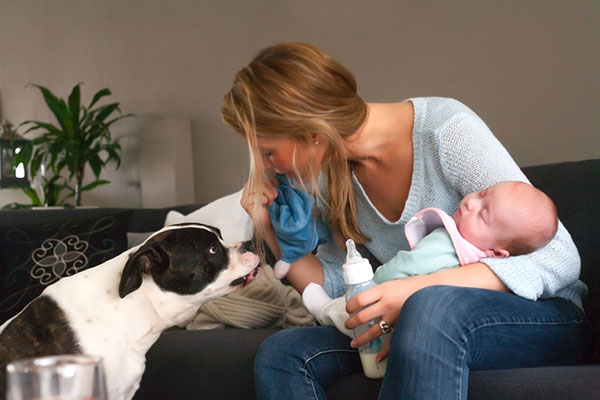 Dog and baby in the same apartment: the rules of a safe hostel