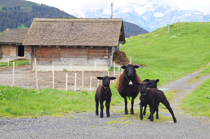 Suiza de verano: montañas de vacaciones familiares