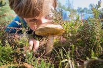 Можно ли детям грибы