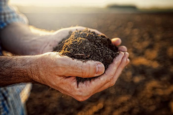 Productos naturales: ¡verdad y mitos!