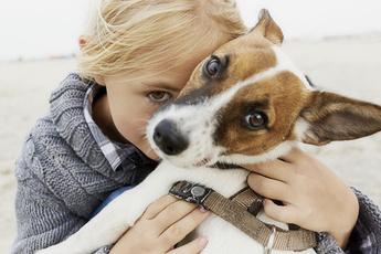 5 опасных заблуждений о дружбе ребенка и собаки