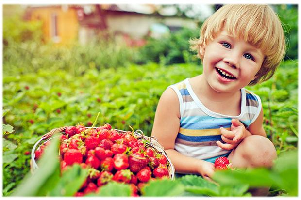 Фото №1 - По грибы, по ягоды